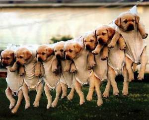 puppies-on-clothesline