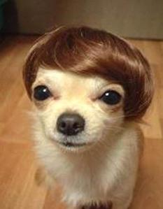 puppy-blogovich