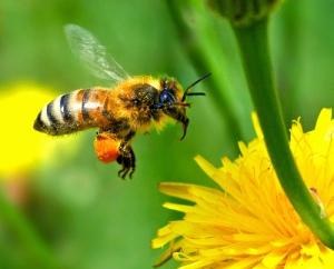 bee(3)