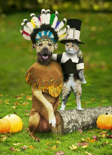 funny pilgrims